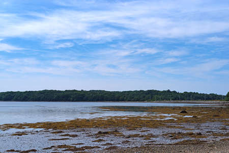 The center part of Sears Island in Searsport, Maine seen from a distance with mud flats and seaweed at low tide in the foreground.