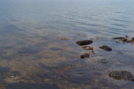 Shallow coastal water with floating seaweed, rocks and rippling waves on the coast of Maine.