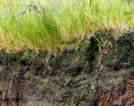Close view of the erosion of a coastline with brown topsoil and dirt and green grass above. Archivio Fotografico - 107978388
