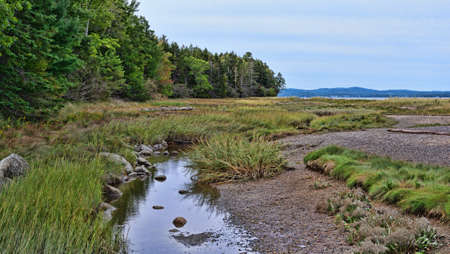 A small tidal stream on the shore of Sears Island in Maine on an overcast day in the summer.