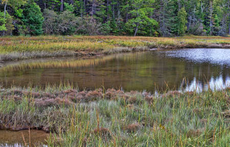 A large tidal pond on the shore of Sears Island in Maine.