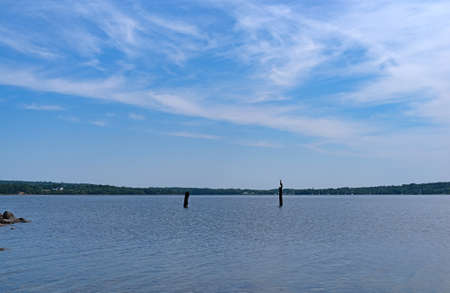 Wide view of Stockton Harbor at Stockton Springs, Maine in the summer with blue sky and wispy clouds above and a cormorant sitting on a wood piling.