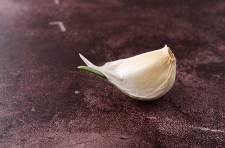 Side view of a single garlic clove sprouting on a red background. Stock Photo