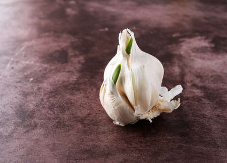 Side view of a head of sprouting garlic on a red background.