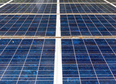Several interlocked solar panels with leaves and pollen on the surface.