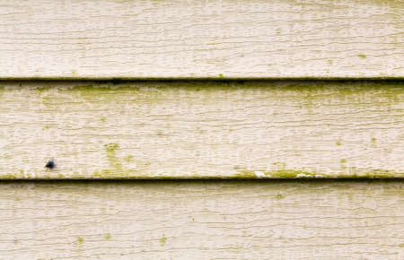 Close view of several rows of beige vinyl siding with a large amount of green mold growing on the surface.