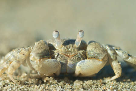 Crab sitting on sand, macro shot showing all detail of crab
