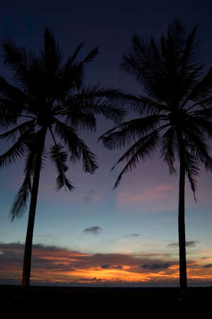 Sunset on beach with palm trees framing photo