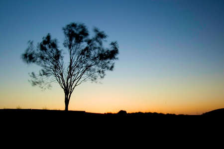 Tree blowing in the wind with sun setting over horizon