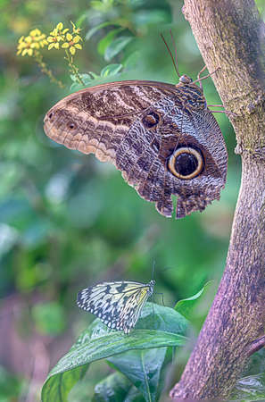 A butterfly appears to defy gravity as it rests on a tree