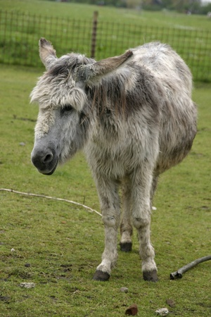 Donkey standig in a field