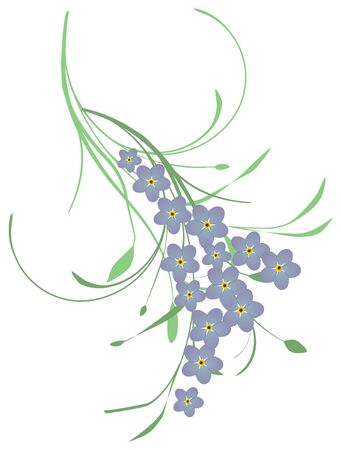 forget me not: Forget me not flower