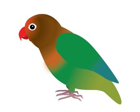 preening: A illustration af a fisheri lovebird