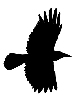 ornithologist: Flying crow silhouette