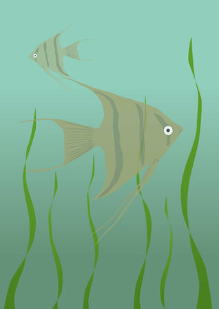 Angelfish in an aquarium Vector