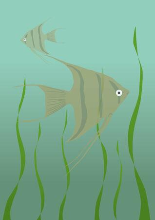 Angelfish in an aquarium Illustration