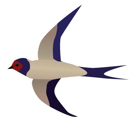 An illustration of a flying swallow Illusztráció