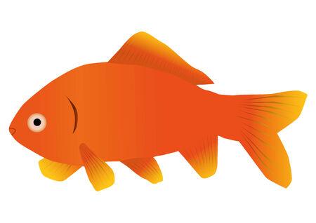 gill: An illustration of a goldfish Illustration