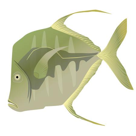 gill: Lookdown fish