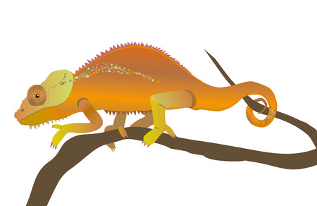 An illustration of a chameleon Vector