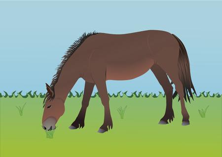 Horse Ilustração