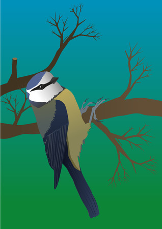 parus: An illustration of a blue tit hanging on a branch Illustration