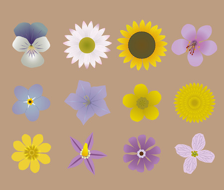 buttercup: A collection of flowers