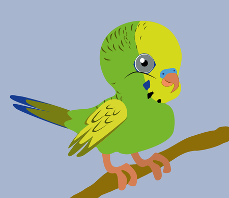An Illustration of a green budgie Vector