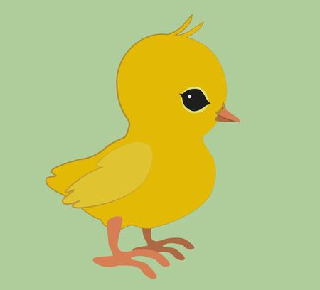 chick: An illustration of a cute chick