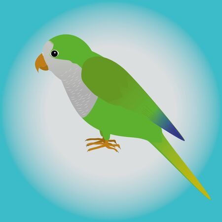 avian: An illustration af a quaker parrot Illustration
