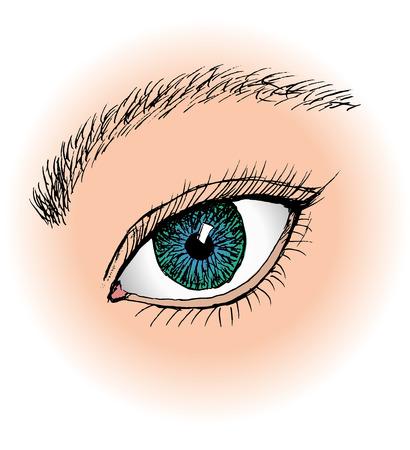 ojo azul: Un ojo azul sola Vectores