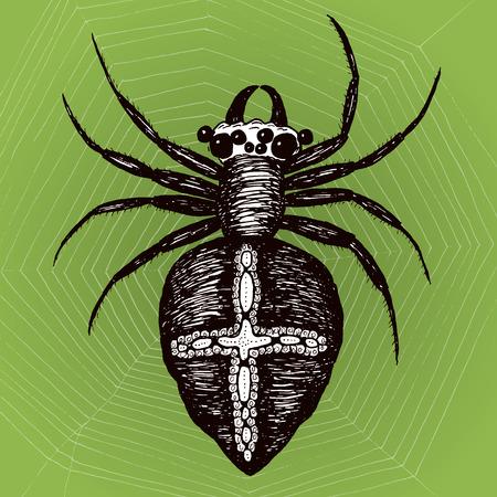 araneae: Spider