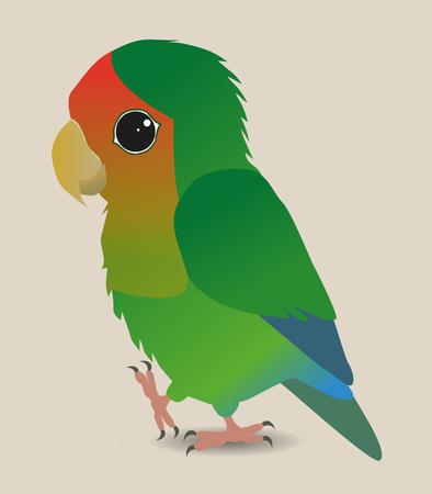 lovebird: Cute lovebird