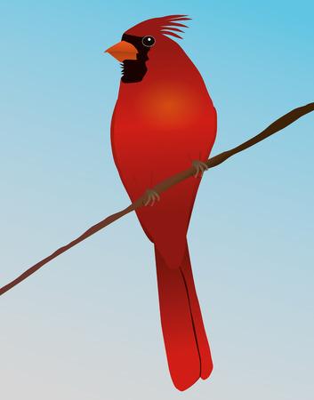 Northern cardinal Иллюстрация
