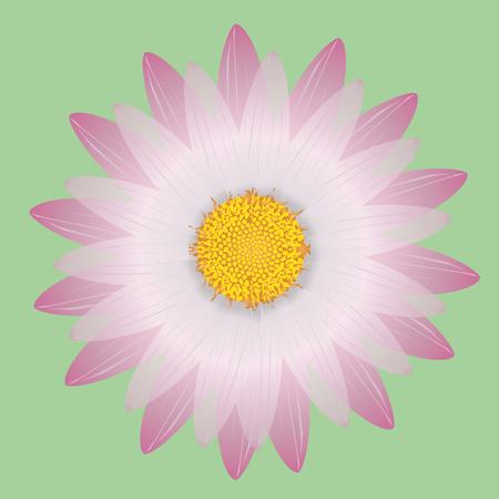 pink daisy Ilustrace