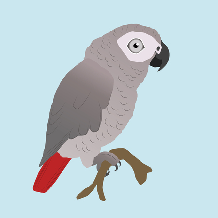 Cute African Gray Parrot Vector Illustration
