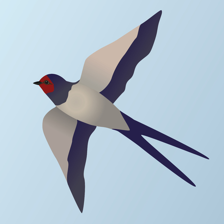 An illustration of a flying swallow Illustration