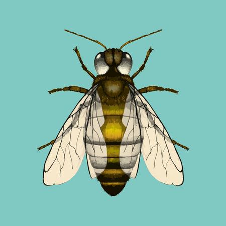 꿀벌의 일러스트