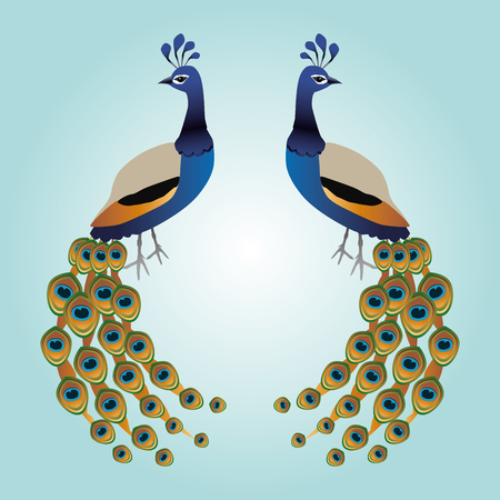 Two graceful male peacocks illustration