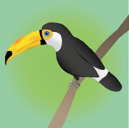 Toco toucan on green background.