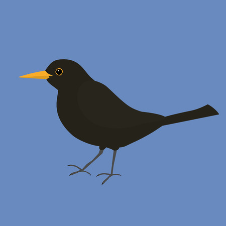 Blackbird vector illustration Фото со стока - 92268941