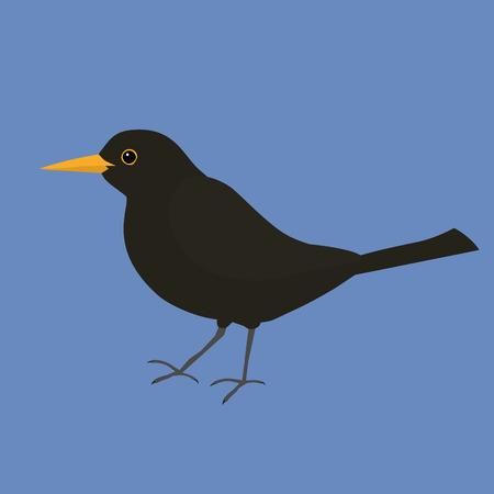 Blackbird vector illustration Vectores