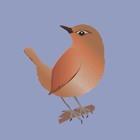 Wren vector illustration Иллюстрация