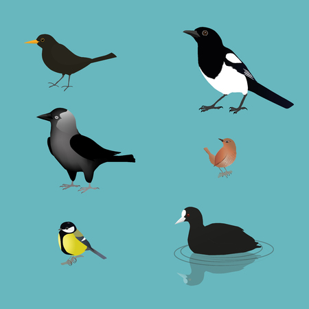 Bird collection  Vector illustration.