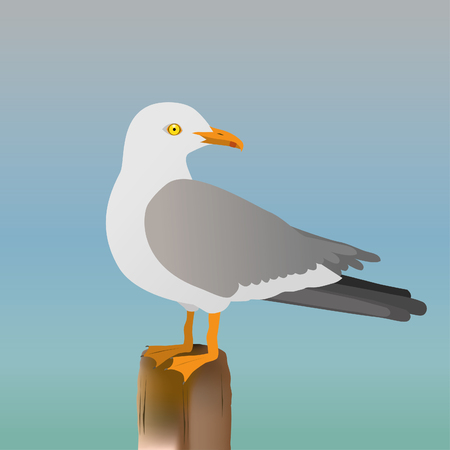 Seagull vector illustration on blue background.
