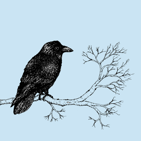 Raven pen drawing