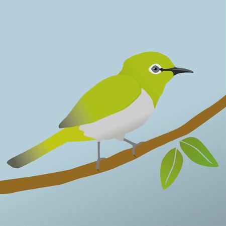 Japanese white eye bird Иллюстрация