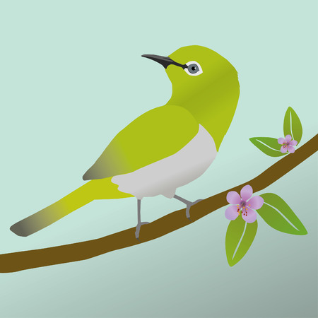 Japanese white-eye bird Иллюстрация