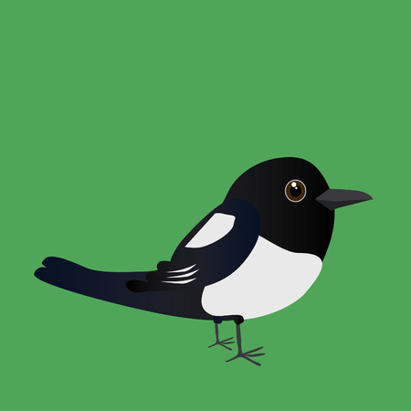 An illustration of a cute magpie