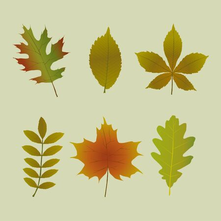 A set of six different tree leafs in autumn colors. vector illustration.